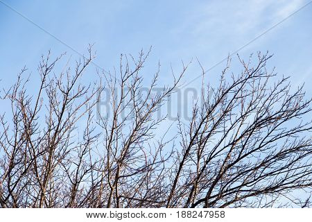 bare tree branches against the blue sky .