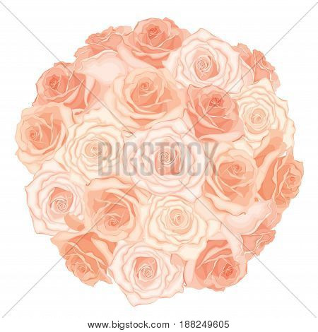 Vector illustration of realistic, detailed bouquet of roses in peach color on white background. Illustration for design.