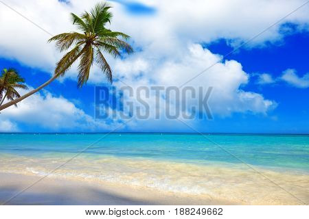 Coconut Palm trees on white sandy beach in Caribbean .