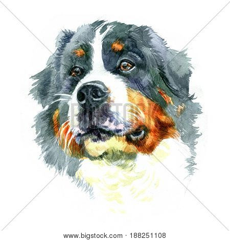 Watercolor closeup portrait of large Moscow Watchdog breed dog isolated on white background. Large longhair working guard dog. Hand drawn powerful home pet. Greeting birthday card design. Clip art
