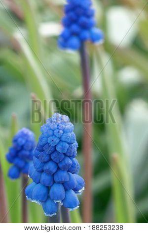 Blue Flower Blur