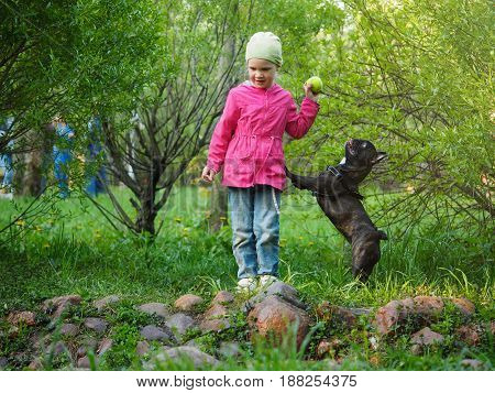 A little girl with a dog in the Park. A child plays with a ball the bulldog jumps