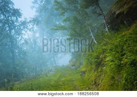 dark scary wet deciduous tree forest, green background Norway