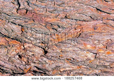 The brown Bark Tree Texture at sunny day