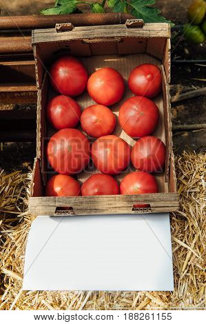 Tasty tomatoes in cardboard boxes on market, closeup. Under each box is a sheet for writing the name of the variety of vegetables. copy space