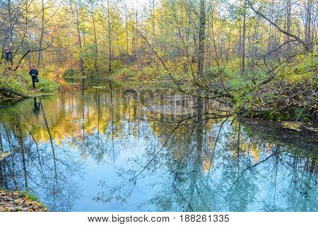 Autumn Forest Forest river Forest swamp Grove Reflection in the water River Spring water Stream Swamp Trees