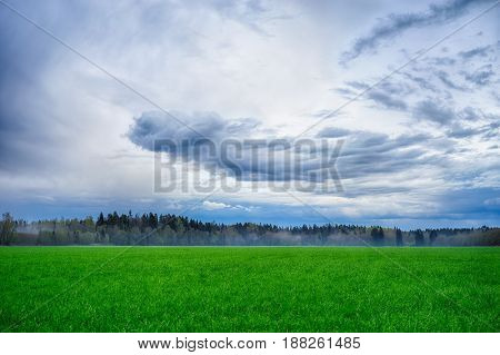 A Field Strewn With Grass And Forest. Summer Landscape