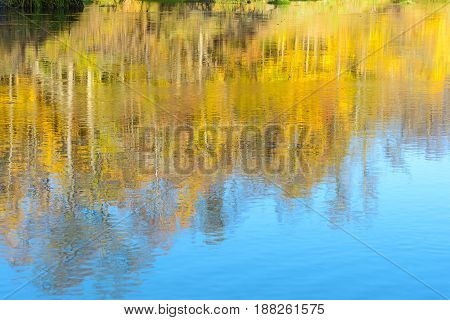 Autumn Forest Forest river Forest swamp Grove Leaves Reflection in the water River Spring water Stream Swamp Trees