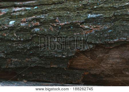Wooden bark background close-up natural nature concept