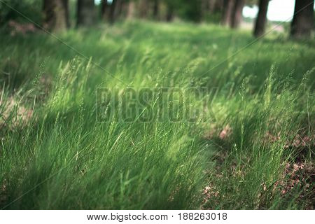 Grass on a summer sunny day with a blurred background in the park