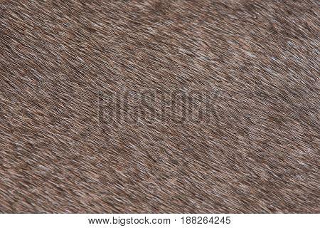 Domestic Animal Brown Fur