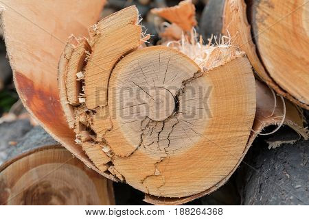 Cutting brown tree wood ring 2 color texture, veneer