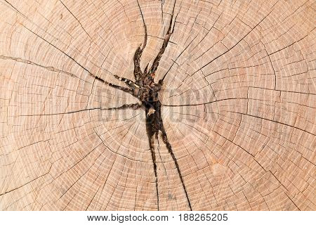 Cutting brown tree wood with annual ring