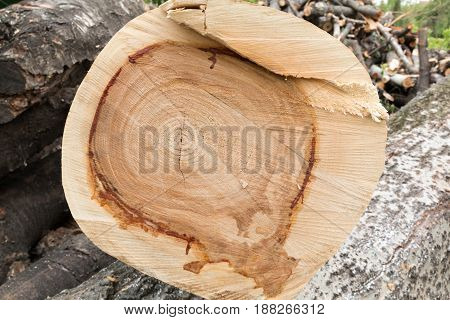 Cutting pine-tree wood texture with fluid resin