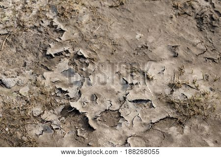 Dry cracked mud as a nature background.