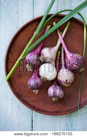 Young, fresh, purple garlic in rustic style