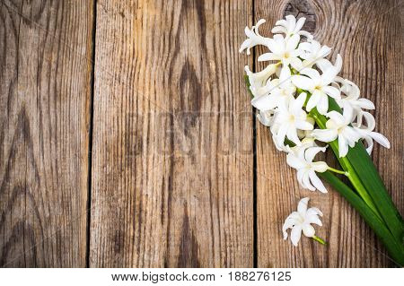 Cutted hyacinth on wooden background. Studio Photo