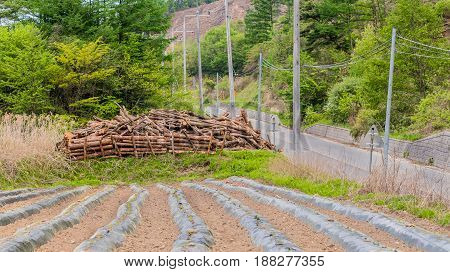 Logs from felled trees stacked next to country road at foot of a plowed field.