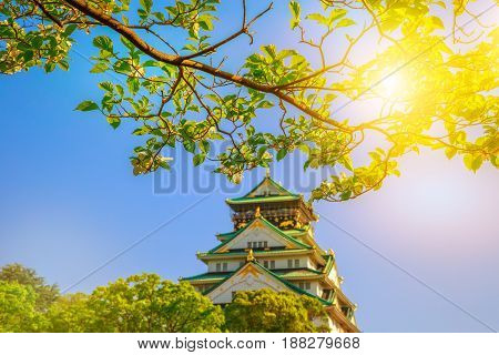 Closeup of branch with white cherry blossoms in the spring and sun rays. Osaka Castle on blurred background. Osaka Castle is one of the most famous landmarks of Japan and Osaka.