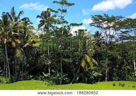 Jungle and Rice Terrace in South East Asia