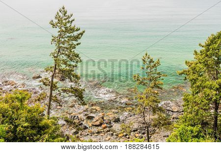 Seascape of trees on shoreline with waves from ocean covering the rocks taken from cliff above the shoreline.