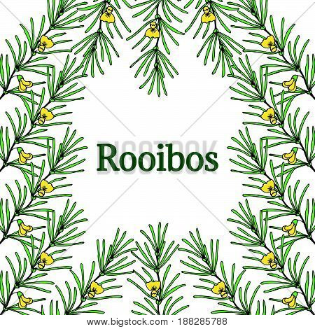 Rooibos tea plant leaf flower border frame. Hand drawn ink sketch illustration in color lineart. African rooibos tea hot drink. Herbal tea. Isolated on white background.