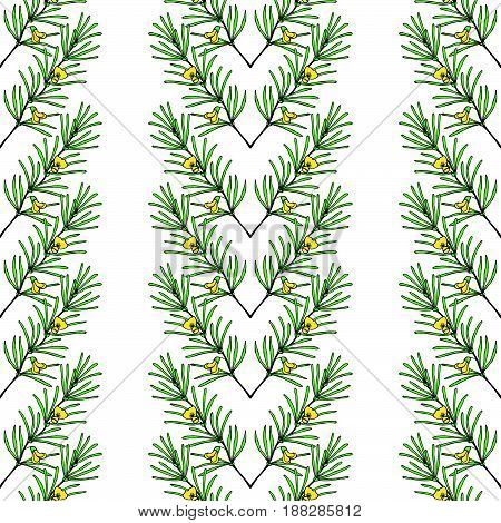 Rooibos tea plant leaf flower. Hand drawn ink sketch illustration in color lineart. African rooibos tea hot drink. Herbal tea. Seamless pattern.