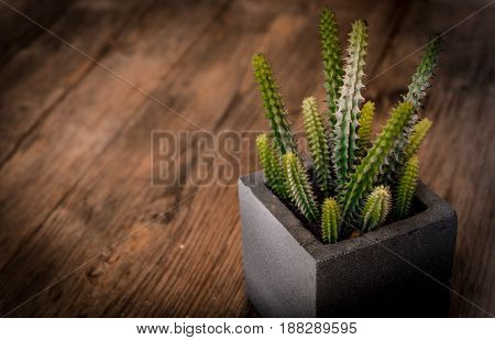A small cactus in a black square pot on wooden table with vignette and vintage tone selective focus.