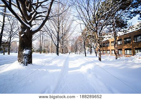 Winter scene in city centre of Sapporo, Hokkaido, Japan.