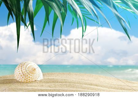 Sea shells are on a background of beautiful sea landscape. Suitable as a card.
