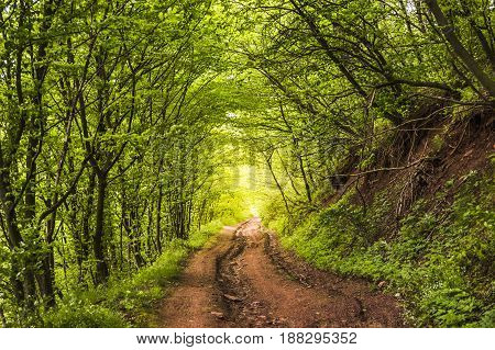 the natural green tunnel road in forest