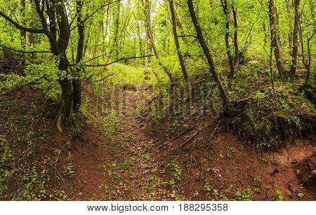 green trees at the hiking trail in forest