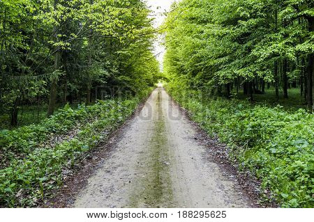 the road in the forest between the trees