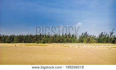 White sand and long green forest under the blue sky