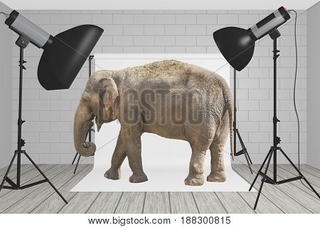 Elephant stands at the center of a photography studio with flashes and light softeners