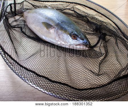 Fish Caught In The Net