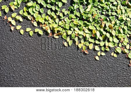 Decorative creepers on a grey textured wall