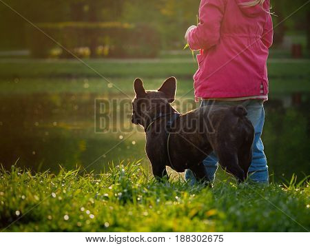 Child and dog looking at the lake. The sunset the sun's rays