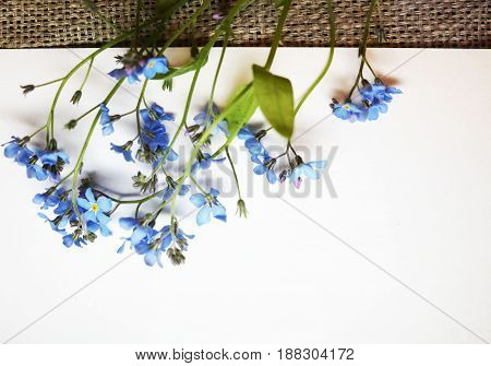 A branch of forget-me-nots on paper and on unpainted canvas