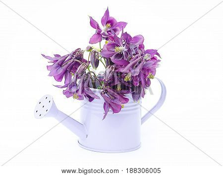 Little Purple Decorative Watering Can For Watering Flowers