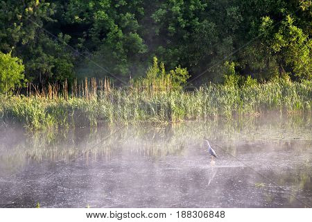 Heron On Misty Morning On The River