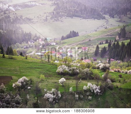 Spring In The Mountains. Orchard Blooming On Hills.