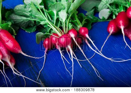Fresh radish on blue background. Top view. Three bunches of small radishes