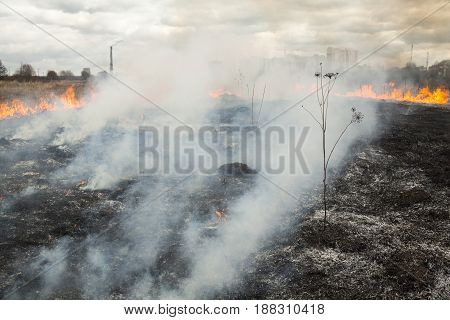 Fire in the field near the city (Kyiv Ukraine). High city buildings and smokestack of the cogeneration plant in the background.