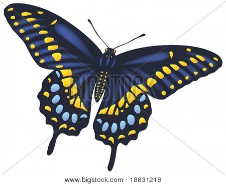 Full detailed vector butterfly