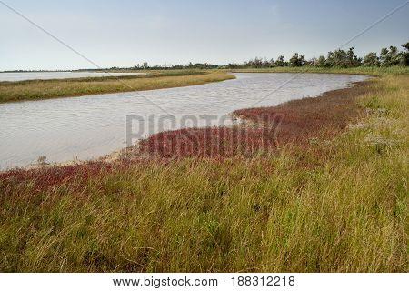 River coastline, wild nature. Sunny landscape Small river