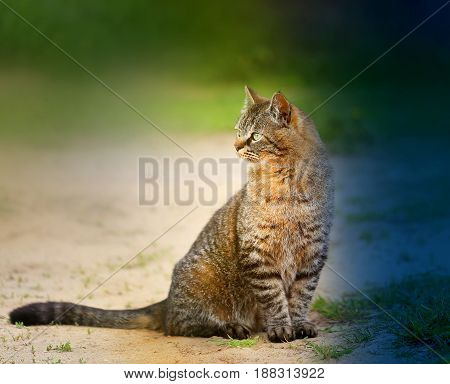 Beautiful cat sitting on the ground on a background of green grass