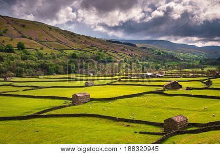 Field Barns at Gunnerside - Swaledale in Yorkshire Dales National Park winds into the northern Pennines. It is famous for its meadows field barns and drystone walls.