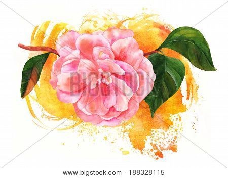 Vintage style watercolor drawing of a tender pink camellia flower in bloom, on a branch with green leaves, on a golden brush stroke texture, decorative element for greeting card or wedding invitation