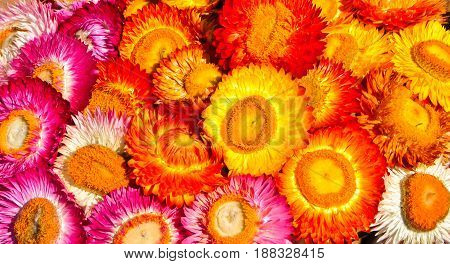 Colorful dry flowers are arranged in a dense manner.